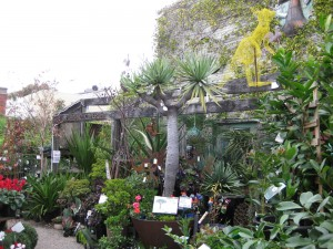 artists-garden-Brunswick-Street-fitzroy