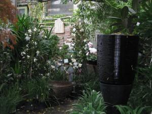 lush-plants-fitzroy-nursery