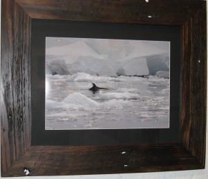 ice-and-whales-Lisa-davidso