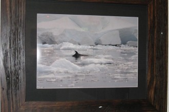 ice-and-whales-Lisa-davidso