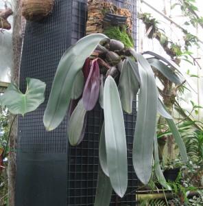 strange-tropical-plant-melborne-botanical-gardens