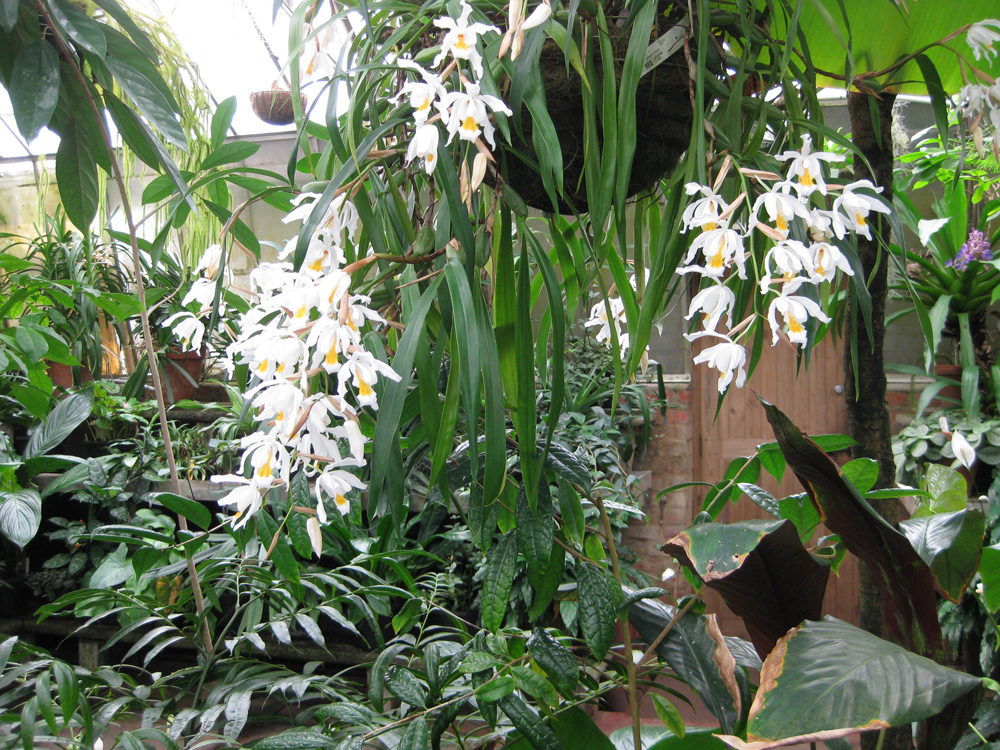 Peace and relaxation in the tropical glasshouse melbournes tropical flowers bot gardens melbourne mightylinksfo
