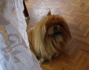 William-the-Peke