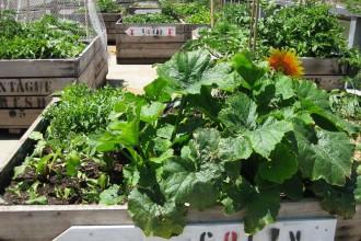 Flourishing-gardens-Fed-Sq-300x225