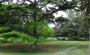The St Kilda Botanical Gardens