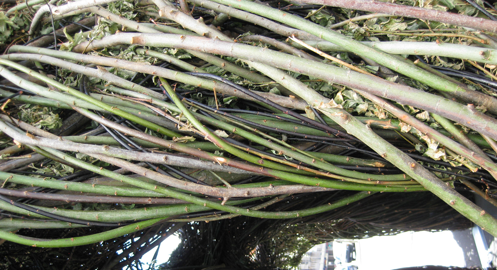 Stickwork By Patrick Dougherty At Federation Square