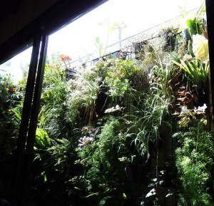 Wall garden at Dandelion in Elwood
