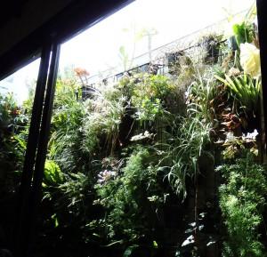 Wall garden at Dandelion in Elwood