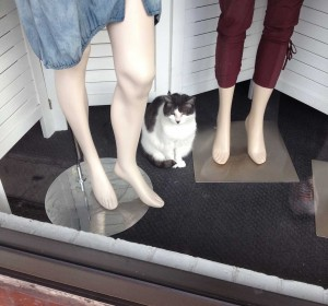 Watched by a people gazing cat.
