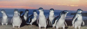 Penguins-sunset