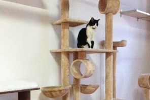 Melbourne's Cat Cafe