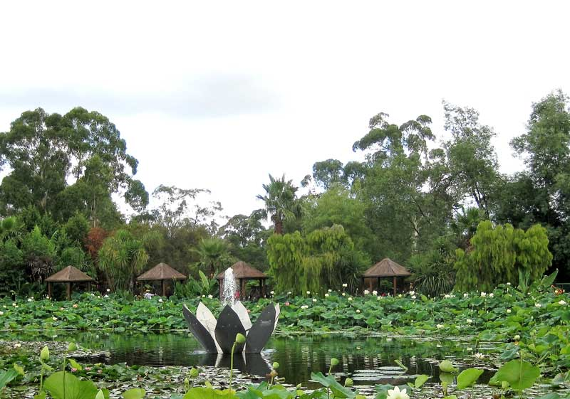 Blue lotus water gardens at yarra junction melbourne places for Garden pond melbourne